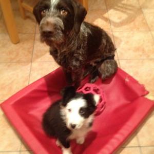 Paxa and Wilco