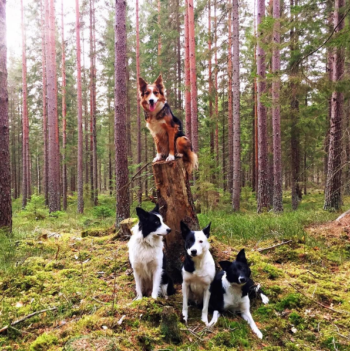 Dogs in the forest
