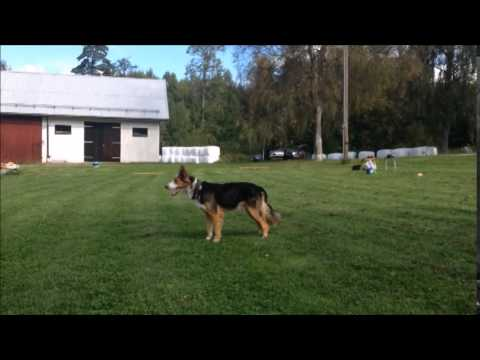 Video from Obedience Training