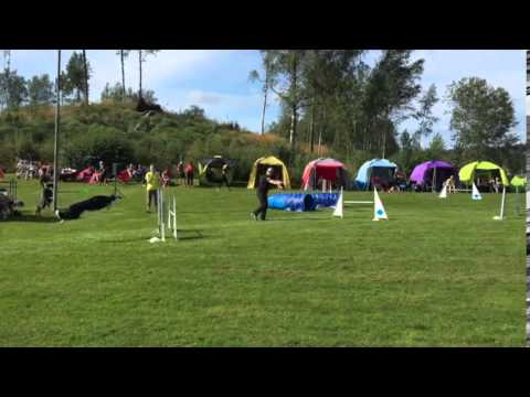 Wilco's Agility Debut